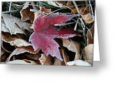 October Frost Greeting Card