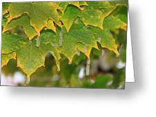 October Icy Ornaments Greeting Card