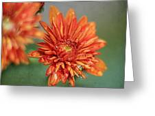 October Mums Greeting Card