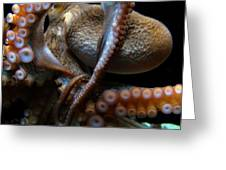 Octopus 1  Greeting Card