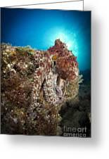Octopus Posing On Reef, La Paz, Mexico Greeting Card