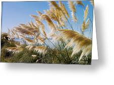 Of Sun And Sky And Wind Greeting Card