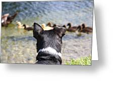 Oh He Wants To Play With Ducks Greeting Card
