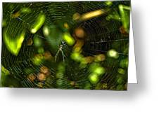 Oh The Web We Weave Greeting Card