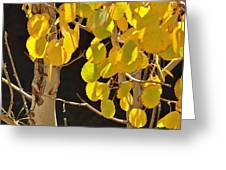 Oh Those Golden Leaves Greeting Card
