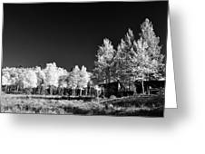 Old Cabin In The Aspen Greeting Card