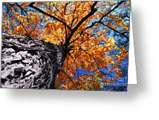 Old Elm Tree In The Fall Greeting Card