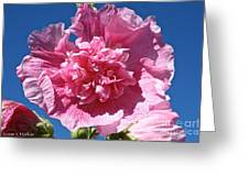 Old Fashioned Hollyhock Greeting Card