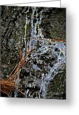 Old Needles And Sap Greeting Card
