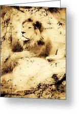 Old Photograph Of A Lion On A Rock Greeting Card