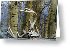 Old Skull And Antlers Greeting Card