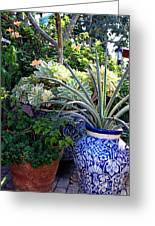 Old Town Potted Cactus Greeting Card