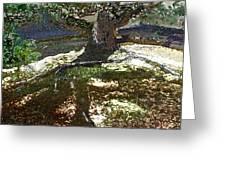 Old Tree II Greeting Card