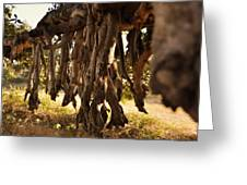 Old Tree Roots Greeting Card by Parikshat sharma