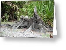 Old Trees Make Good Art Work Greeting Card