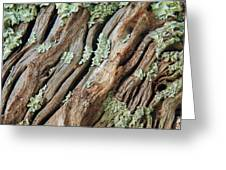 Old Wood And Lichen Greeting Card