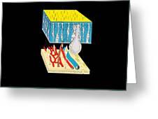 Olfactory Epithelium, Artwork Greeting Card