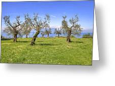 olive grove on Lake Gardan Greeting Card