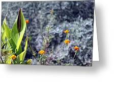 Olive Trees In The Background Greeting Card