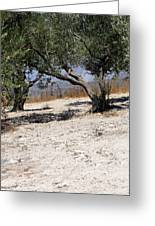 Olive Trees Standing Alone Greeting Card