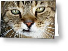Oliver The Cat Greeting Card