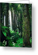 Olympic Forest Greeting Card by Ric Soulen
