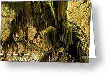 Olympic Moss Greeting Card