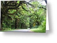 Olympic National Park Greeting Card