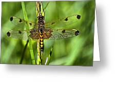 On Delicate Wings Greeting Card