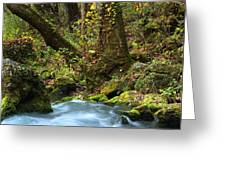 On The Banks Of Big Spring In The Missouri Ozarks Greeting Card