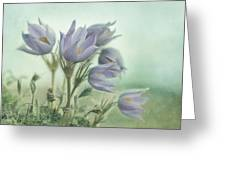 On The Crocus Bluff Greeting Card