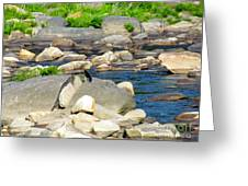 On The Rock Greeting Card by Randi Shenkman