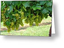 On The Vine - Before The Wine Greeting Card