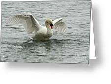 On The Wings Of A Swan Greeting Card