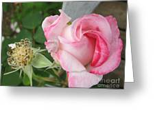 One Arriving And One Leaving Greeting Card