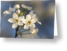 One Fine Morning In Bradford Pear Blossoms Greeting Card
