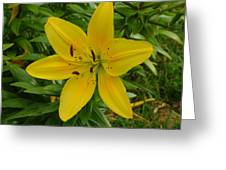 One Flower In Yellow Greeting Card