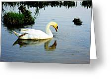 One Foot At Ease Swan Greeting Card