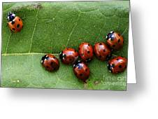 One Lady Bug Voted Off The Island Greeting Card