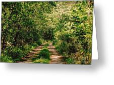 One Lonely Path Greeting Card