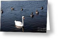 One Swan Six Ducks Greeting Card