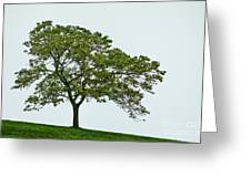 One Tree Hill. Greeting Card