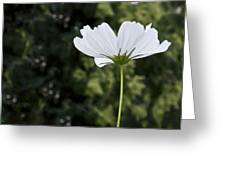 One Wildflower Greeting Card