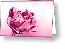 Only A Rose Greeting Card