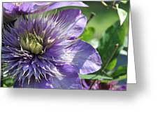 Only In Purple Greeting Card