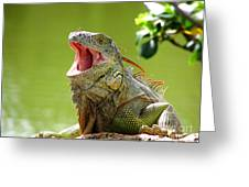 Open Mouth Iguana Greeting Card
