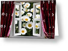 Open Windows Onto Large Daisies Greeting Card