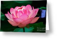Opening Lotus Greeting Card by Susan Isakson