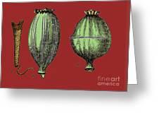 Opium Harvesting Greeting Card