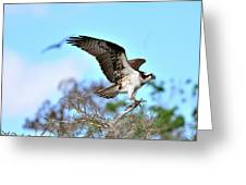 Opsrey Spreading It's Wings Greeting Card